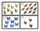 Butterfly Addition and Subtraction