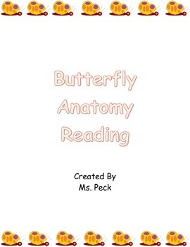 Butterfly Anatomy