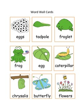 Butterfly and Frog Lifecycle Bundle: Readers, Printables, and Activities