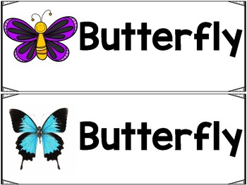 Butterfly Animal Study