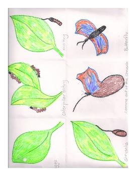 Butterfly Battle a Magic School Bus Novel Study
