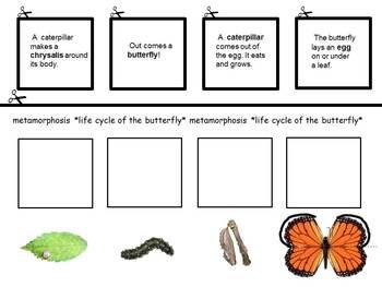 Butterfly! Butterfly! Butterfly! *Butterfly Life Cycle* EZ Lanterns & Craft *