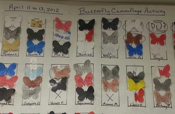 Butterfly Camouflage Lab