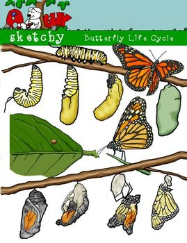 Butterfly / Caterpillar Life Cycle Clipart - 300dpi Color, Grayscale, Blacklined