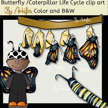 Butterfly /Caterpillar Life Cycle clip art. Color and B&W