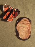 Butterfly & Chrysalis Project. Fun Craft Art