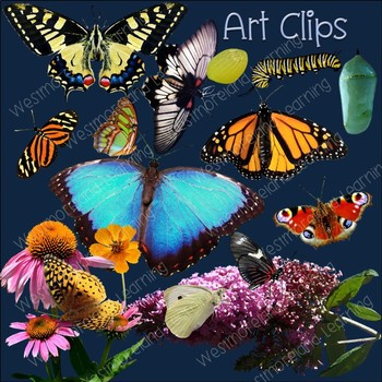 Butterfly Clip Art Real Clips Photo & Artistic Digital Stickers