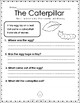 Butterfly Comprehension Worksheet