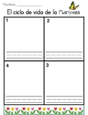 Butterfly Cycle Template (Spanish)