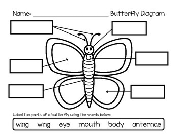 Label a Butterfly - Butterfly Diagrams