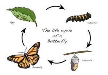 Butterfly ELA