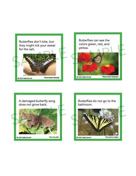 Butterflies Unit Activity - Fun Fact Cards for Games, Bulletin Board