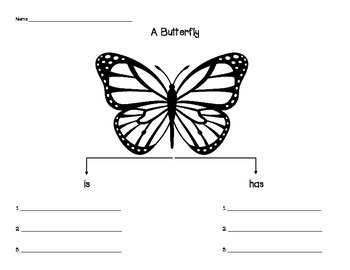 Butterfly Graphic Organizer