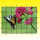 Butterfly Grid Drawing Art Lesson