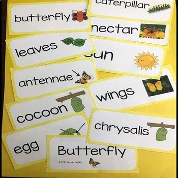 Butterfly Vocabulary Word Wall Cards