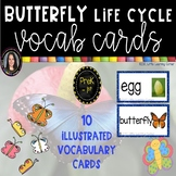 Butterfly Life Cycle Picture Vocabulary Cards