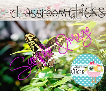 Butterfly Image_148: Hi Res Images for Bloggers & Teacherpreneurs