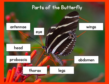 Butterfly Interactive Matching Cards / Hands-on Lessons / Montessori Style