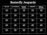 Butterfly Jeopardy Game Powerpoint