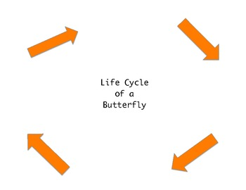 Butterfly LIfe Cycle with information