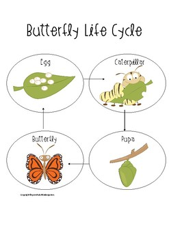 Butterfly Life Cycle!