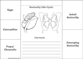 Butterfly Life Cycle Craft Foldable: Eggs, Caterpillar, Pupa, Etc.