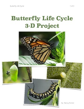 Butterfly Life Cycle 3-D project