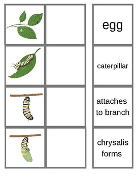 Butterfly Life Cycle: 4 level matching