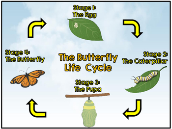 Butterfly Life Cycle AR Board