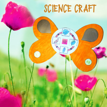 Butterfly Life Cycle Activity and Craft
