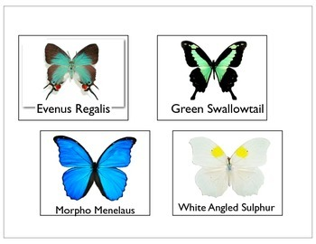 Butterfly Life Cycle Activity prek-1st grade FREE