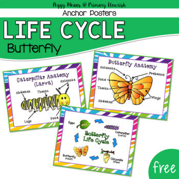 Butterfly Life Cycle Anchor Posters