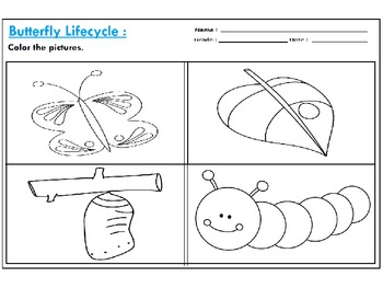 Butterfly Life Cycle Art Worksheets :