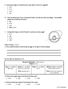 Butterfly Life Cycle: Assessment and Study Guide