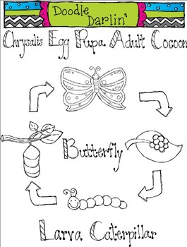 Butterfly Life Cycle Blackline Clipart
