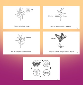 Butterfly Life Cycle Book Pack
