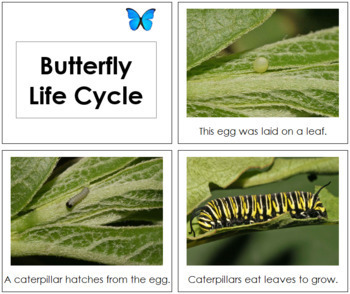 Butterfly Life Cycle Book - Toddler
