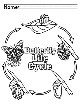 Butterfly Life Cycle Booklet