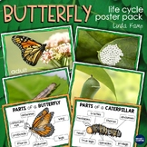 Butterfly Life Cycle Posters (Free)