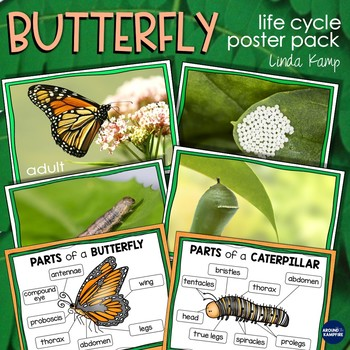 Butterfly Life Cycle Bulletin Board Set