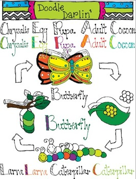 Butterfly Life Cycle COMBO Clipart
