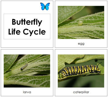 Butterfly Life Cycle Cards - Toddler