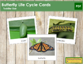 The Butterfly Life Cycle Cards - Montessori Toddler Cards (vocabulary)