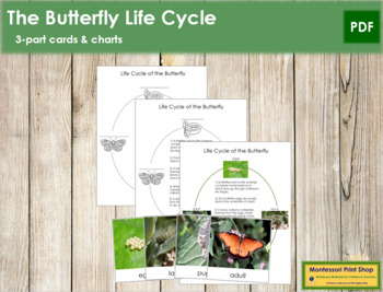 Butterfly Life Cycle Cards and Charts