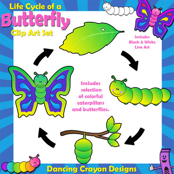 Butterfly Life Cycle Clip Art Sequence By Dancing Crayon Designs