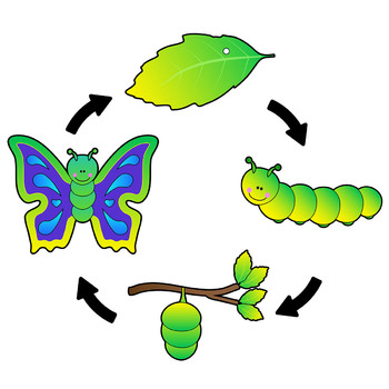 Image result for caterpillar butterfly clipart