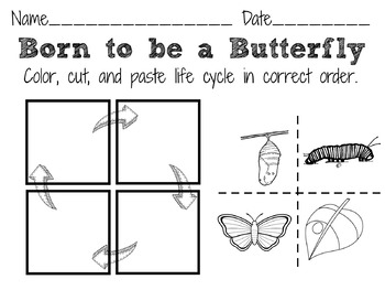 Butterfly Life Cycle Chart