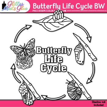 Butterfly Life Cycle Clip Art {Great for Animal Groups, Insect Resources} B&W