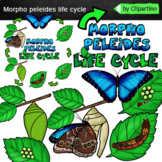 Butterfly Life Cycle Clip Art-Morpho peleides