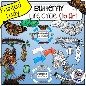 Butterfly Life Cycle Clip Art (Painted Lady Butterfly)
